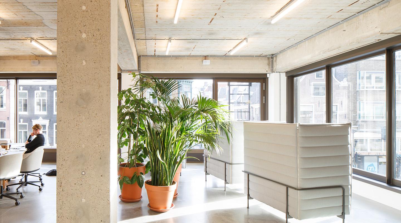 Pianta Da Ufficio Poca Luce hai la sensazione che il tuo ufficio sta minando la